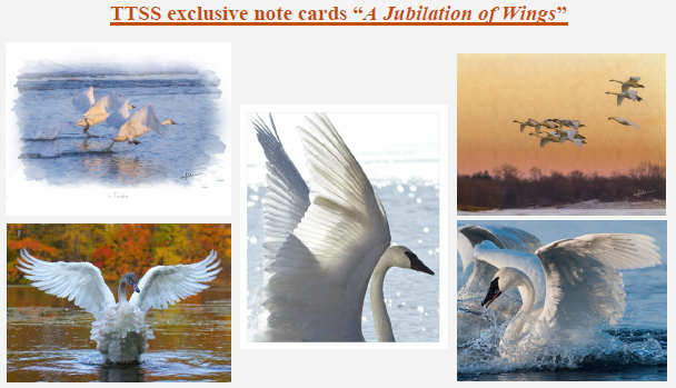 """Set of 5 Exclusive TTSS Notecards. """"A Jubilation of Wings."""" $10"""