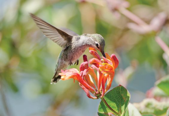 Fort Bend Bird-Friendly Communities