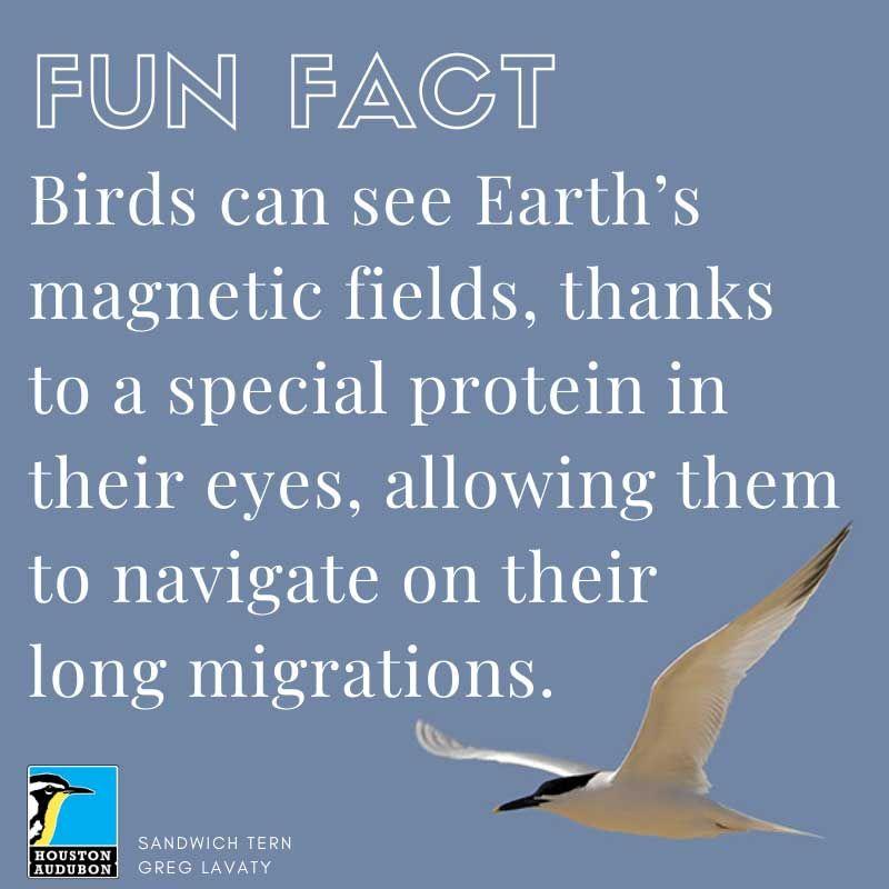 Magnetic navigation fun fact