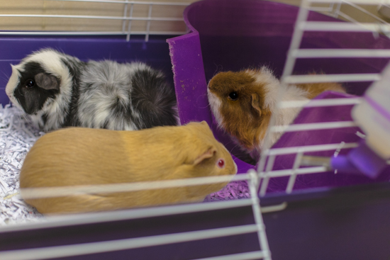 Carmelo, Lucy & Oreo