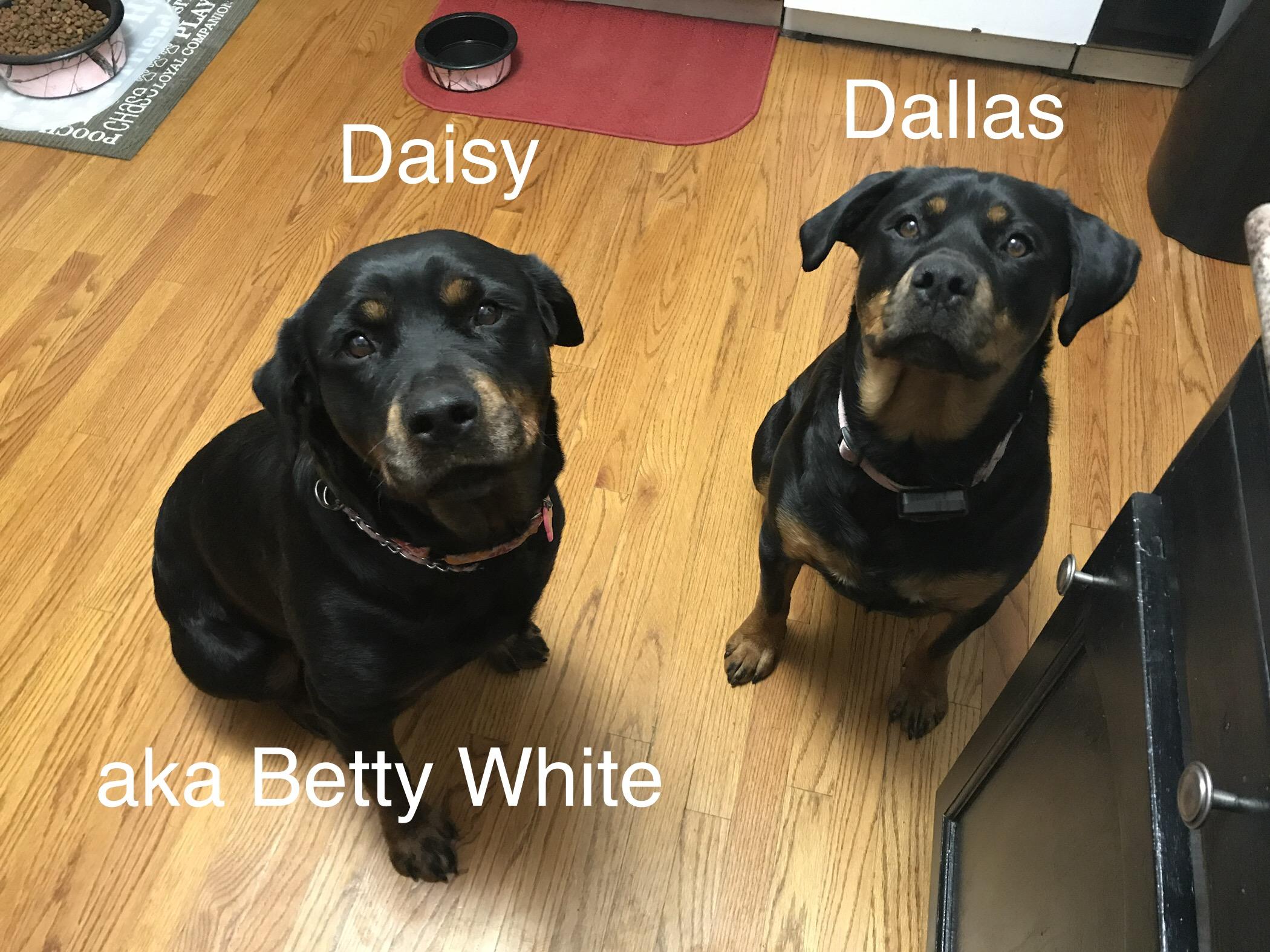 11/4/19: Daisy (aka Betty White)