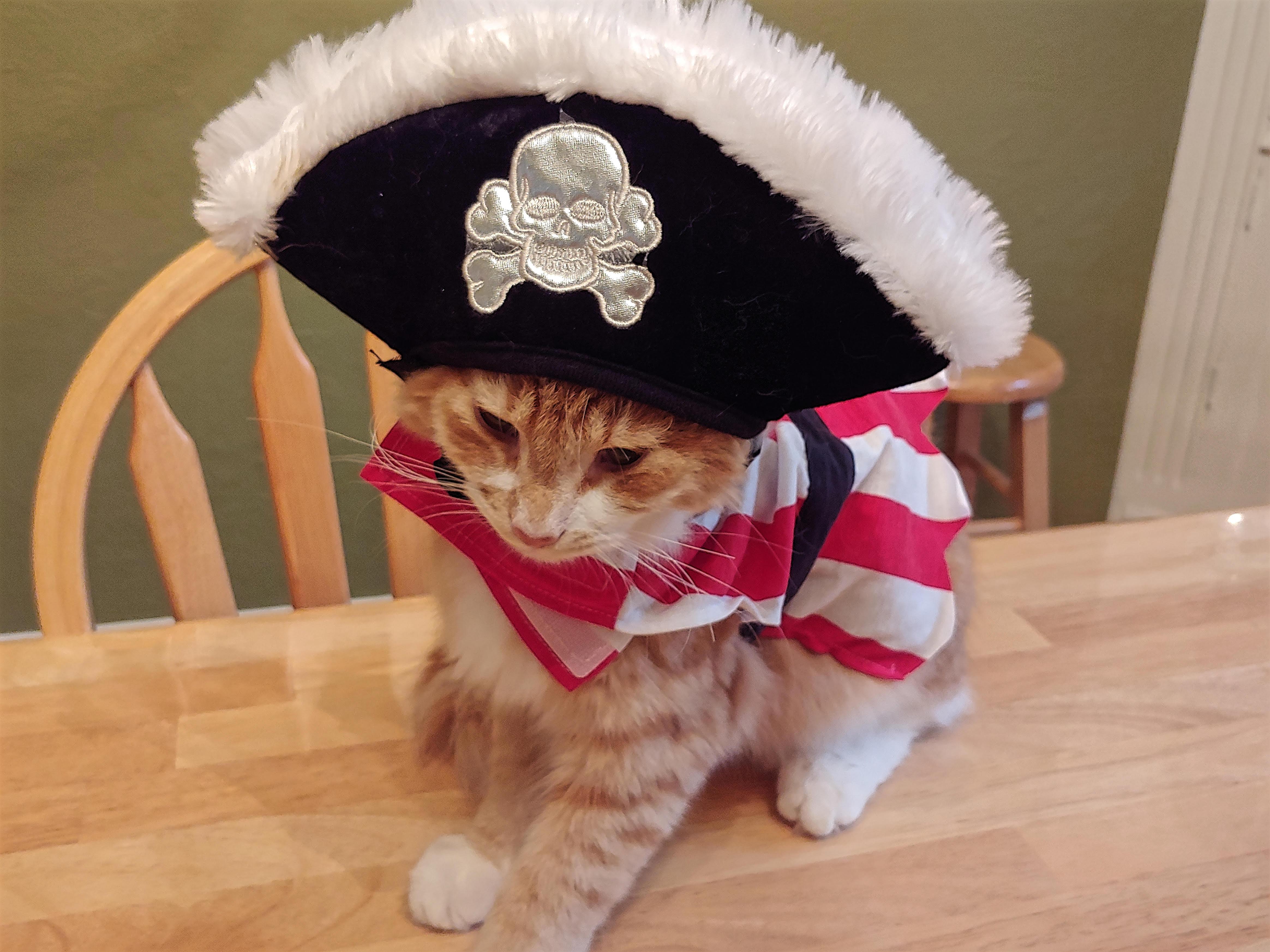 #6 Dread Pirate Parker