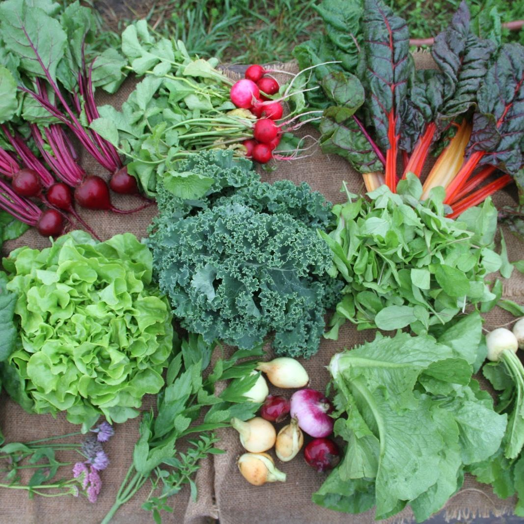 Purchase Glynwood-Grown Summer/Fall Vegetable CSA Share