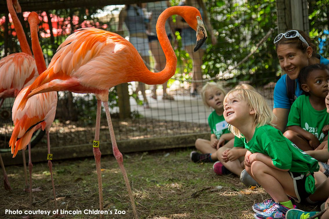 Lincoln Children's Zoo: Great for little legs, perfect for growing minds