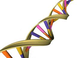 A picture of a strand DNA