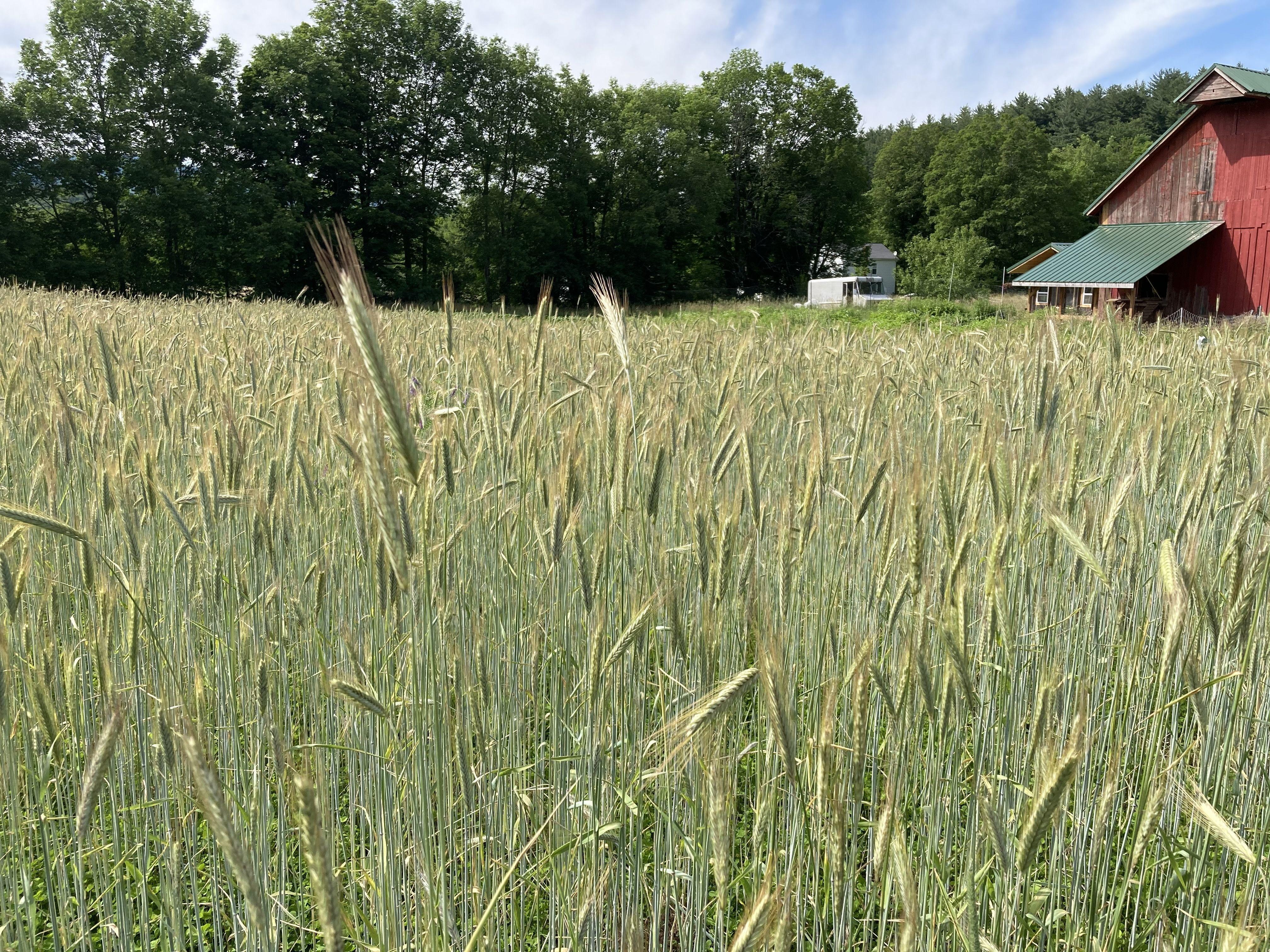 Glynwood Grains Program