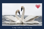 #GivingTuesday Swan Love magnet with your donation of $50 or more
