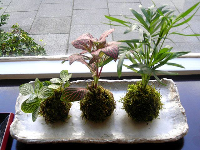 Kokedama Class - Apr. 9th