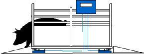 Animal & Platform Scales