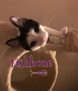 Fishbone 12619