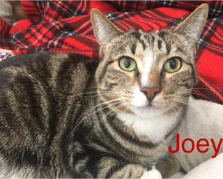 Joey adopted 021718