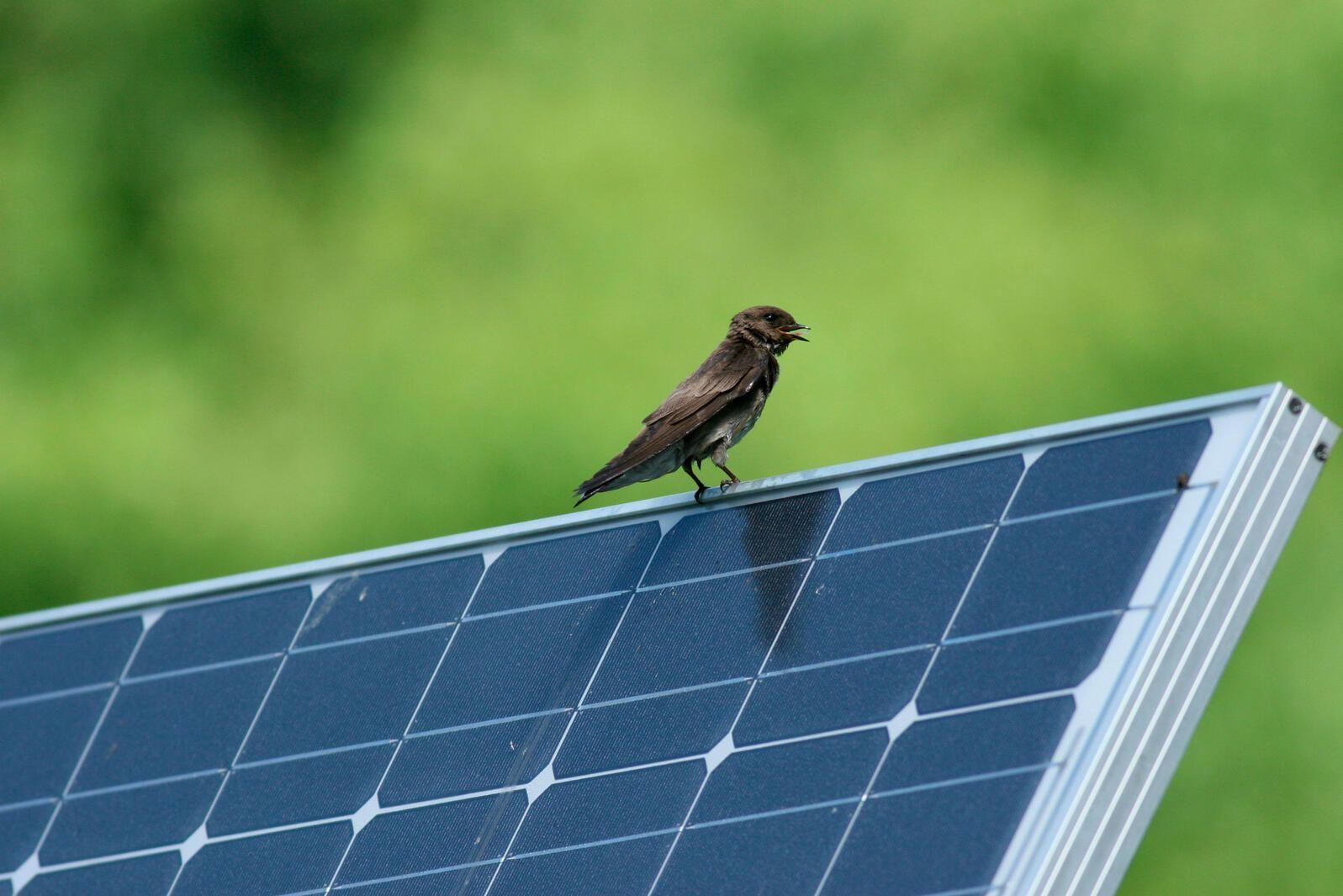 Going Solar in Nebraska