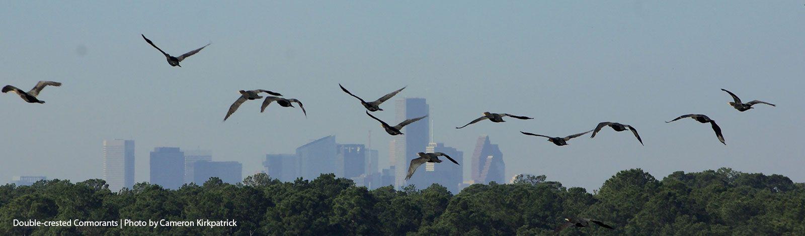 Avian Affair