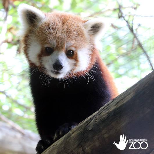 Volunteering In Lincoln Ne: Lincoln Children's Zoo : Homepage