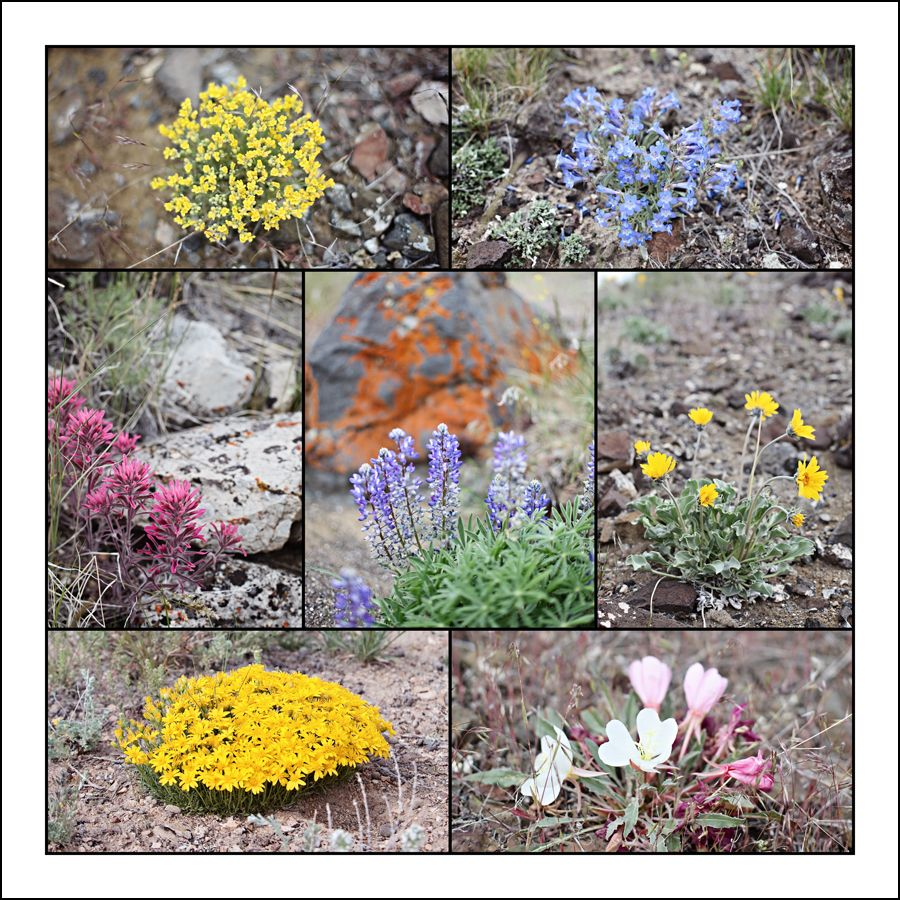 Range Wildflowers