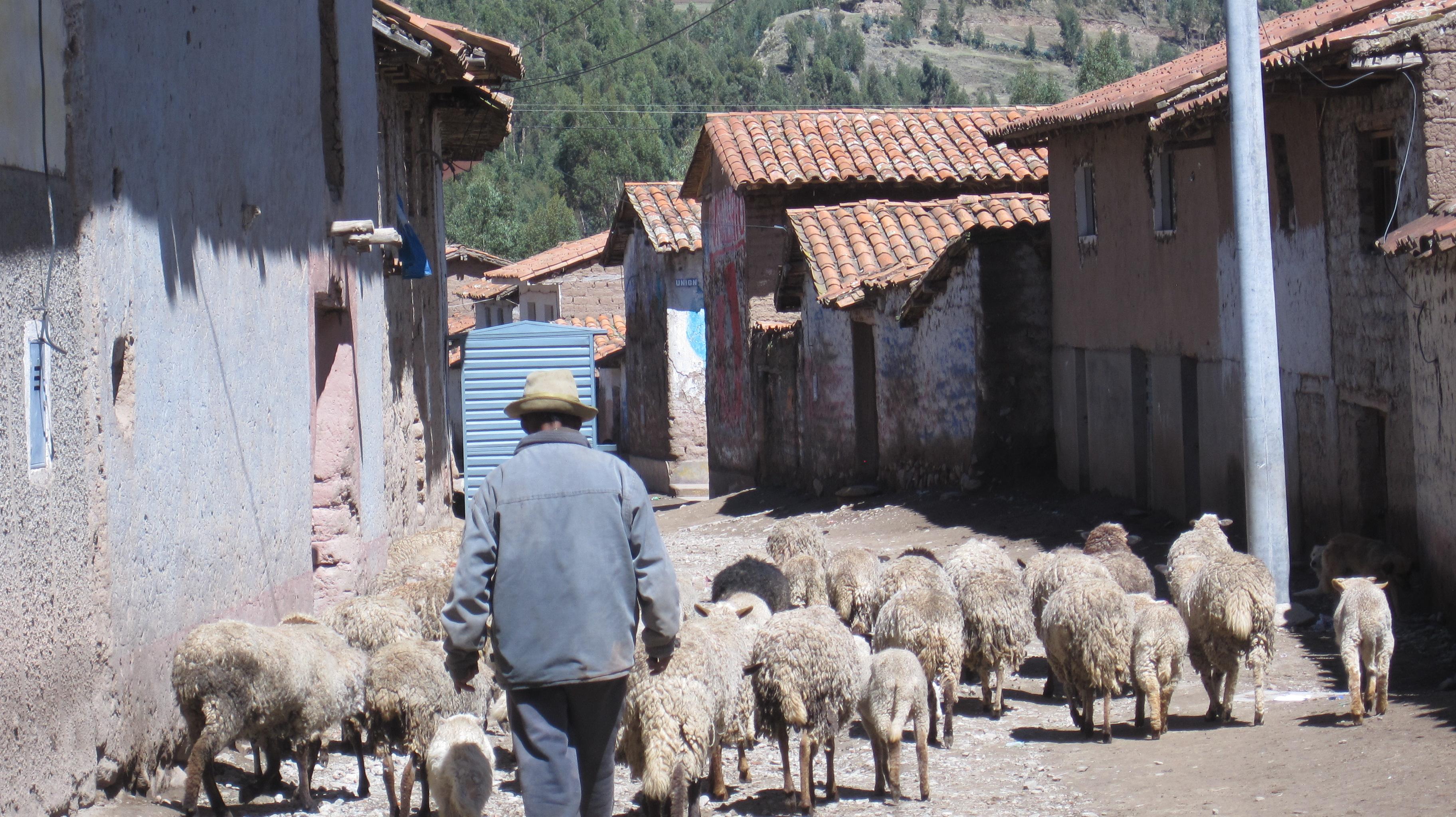 Pomacanchi, Cusco (Peru)
