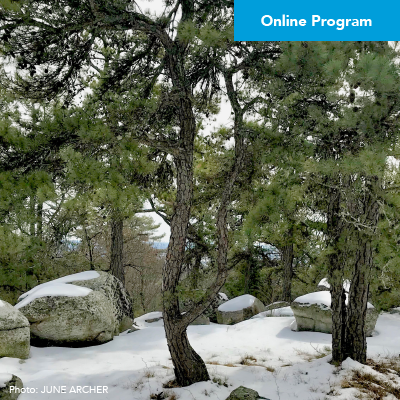 DIY Forest Bathing with Jane Webinar – Click Here to Register