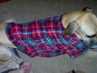 SPA 4 PAWS custom made COATS and BEDS for all BREEDS