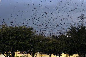 Purple Martin Migration Has Started