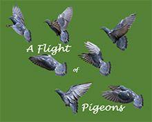 Register for December 3 class: A Flight of Pigeons
