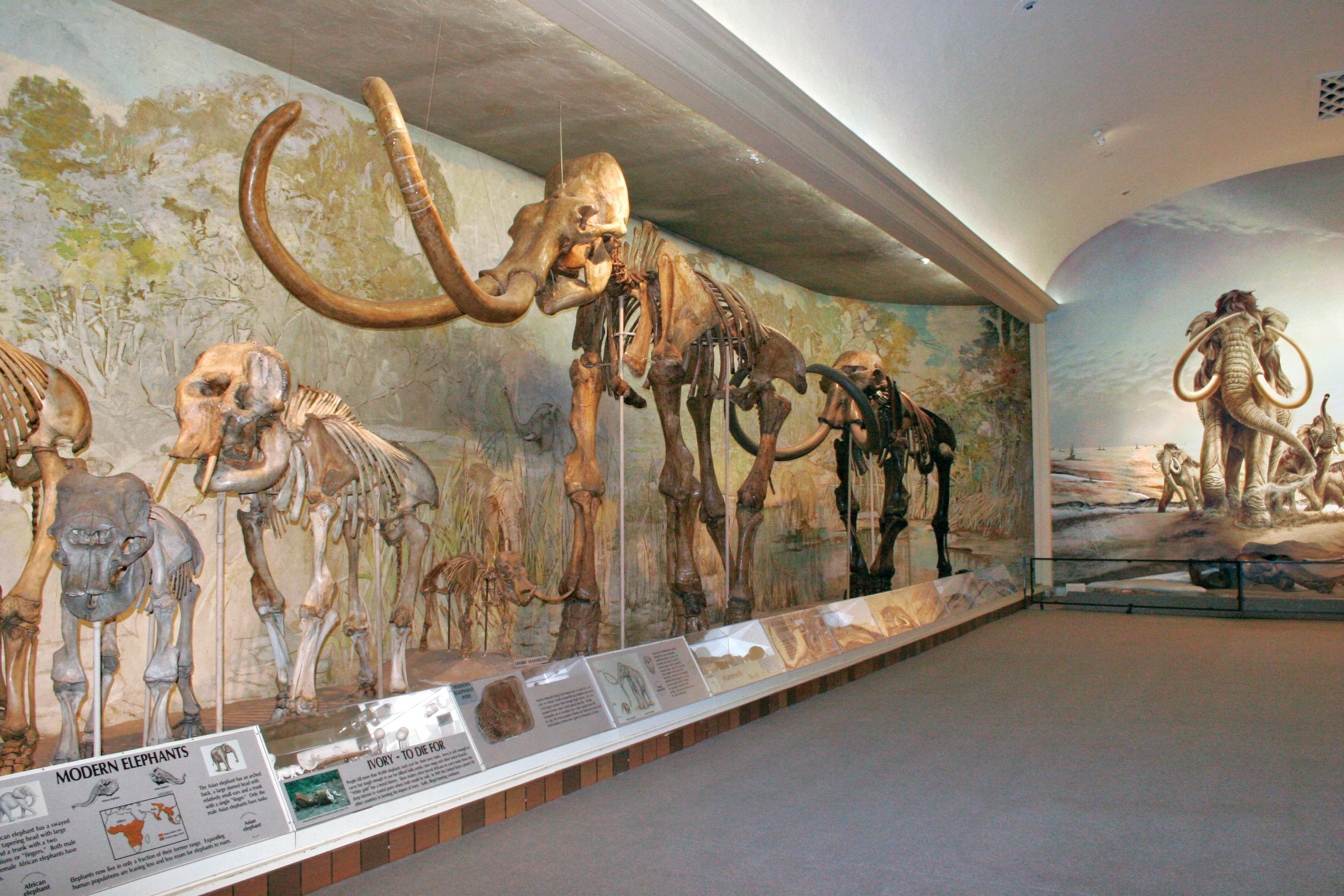 Painting Paleo Life