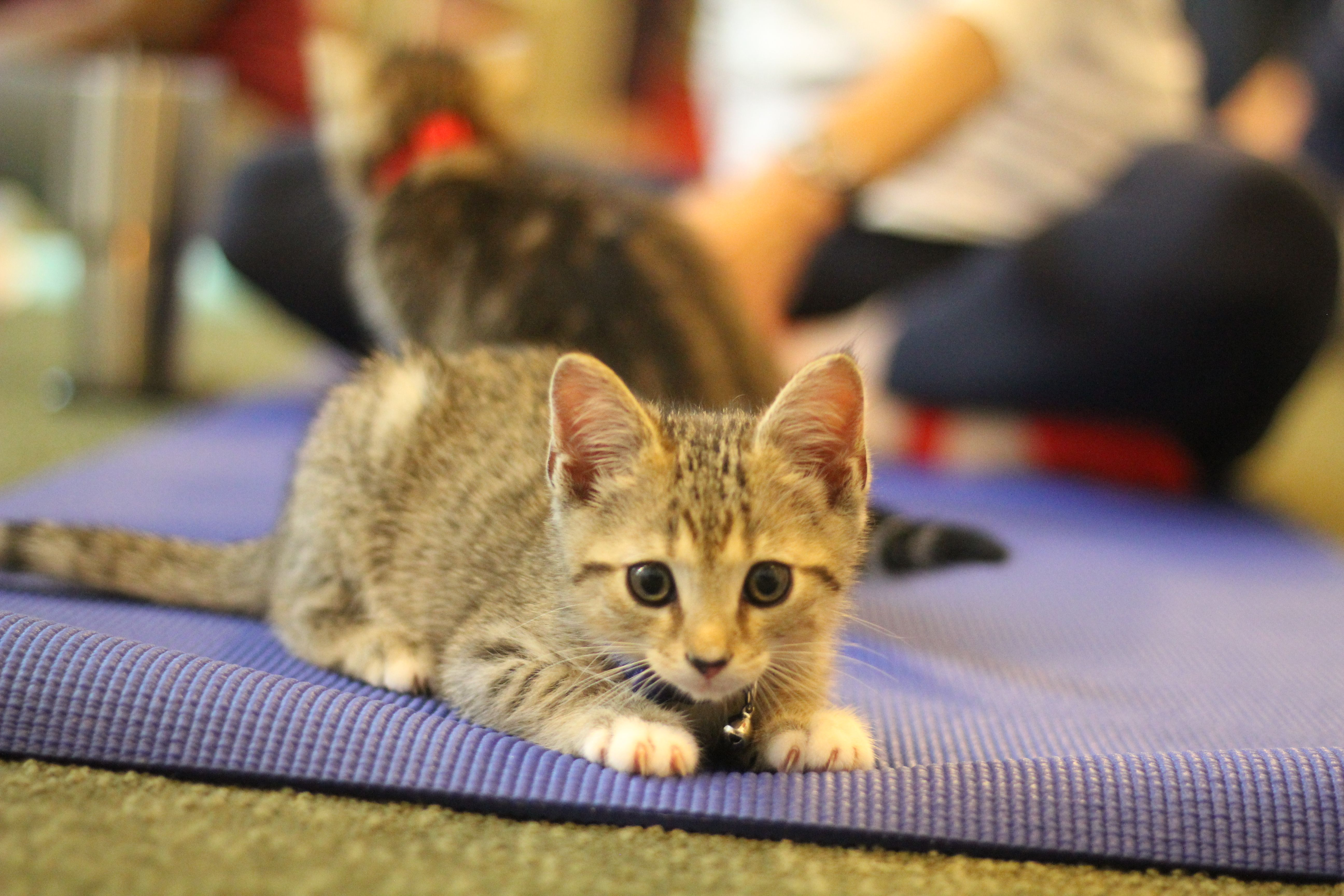 Kitten Yoga Fun!