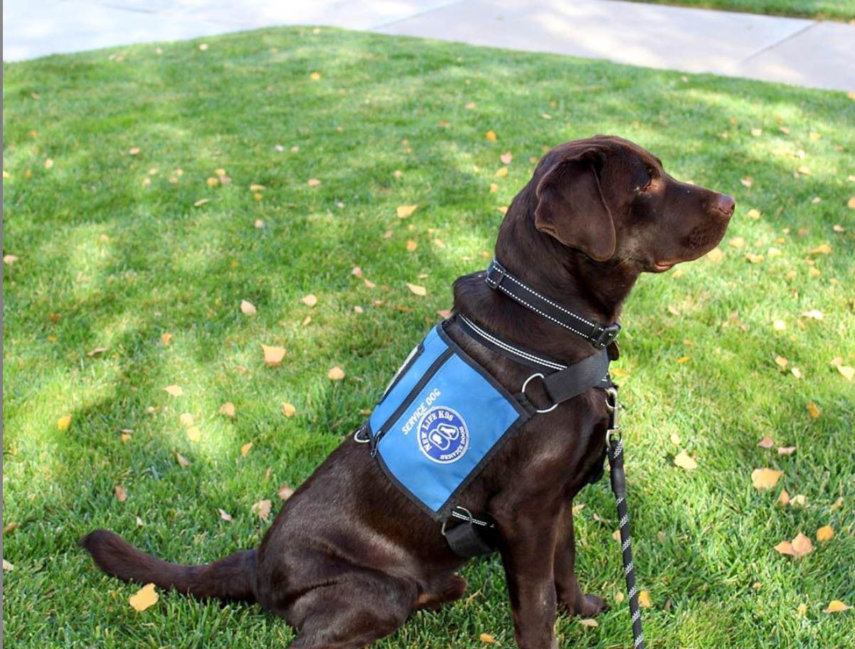Psychiatric Service Dogs [Explained]