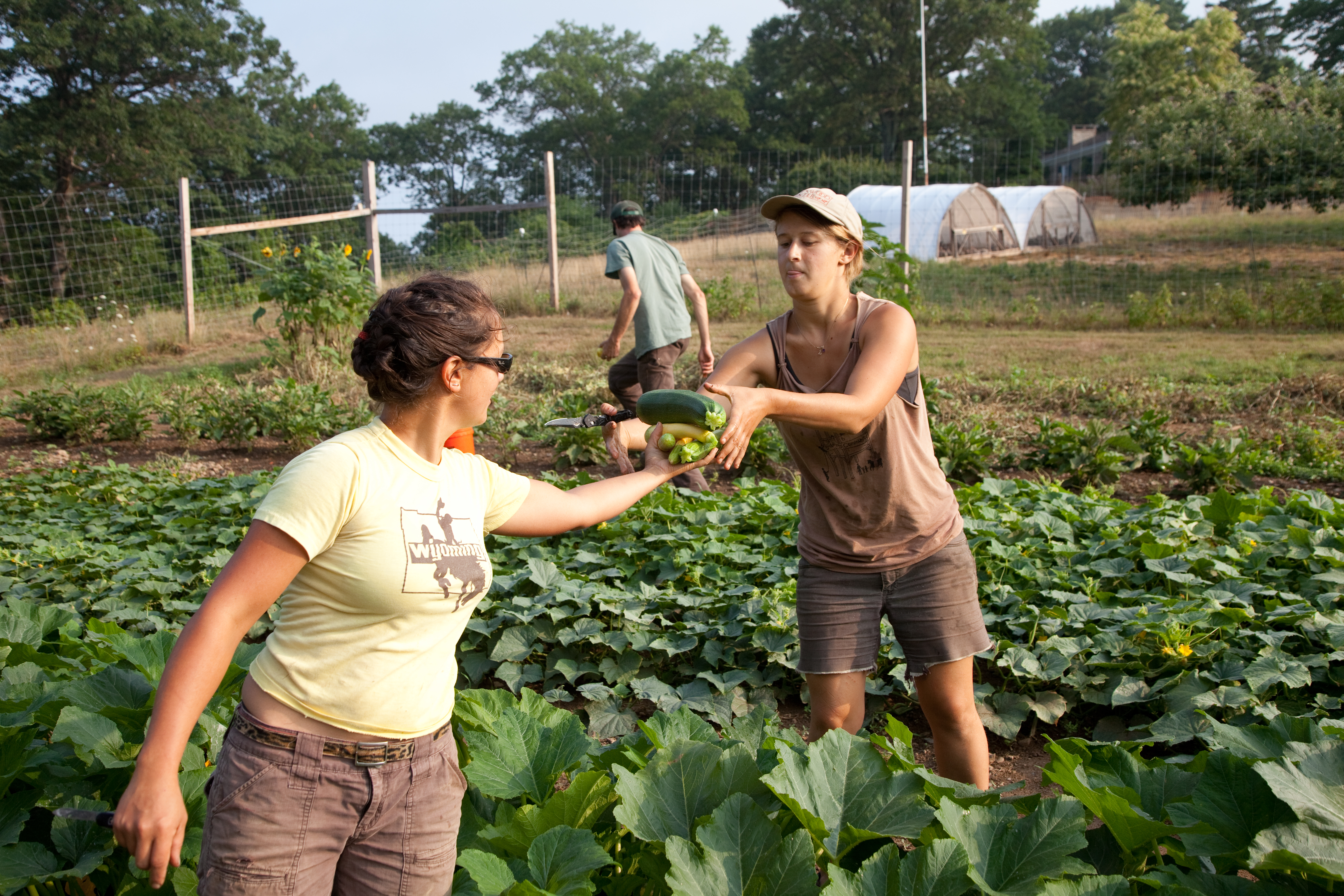 Five Hudson Valley Organizations Join Forces to Train More Young  Farmers, Increase Impact