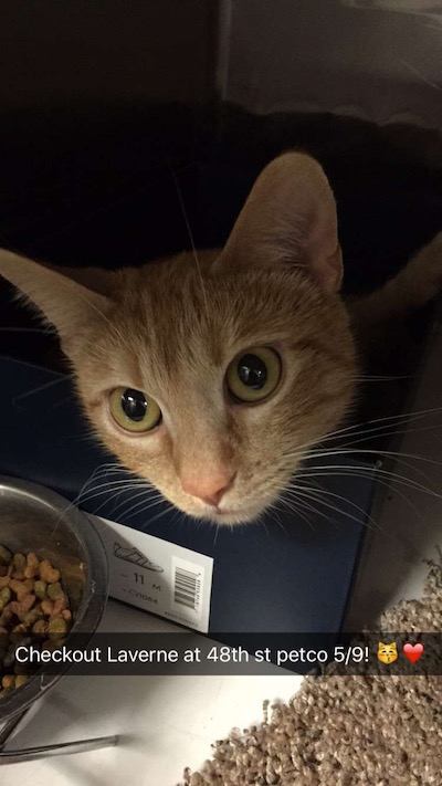 Laverne - Meet me at the 48th & O Street Petco!