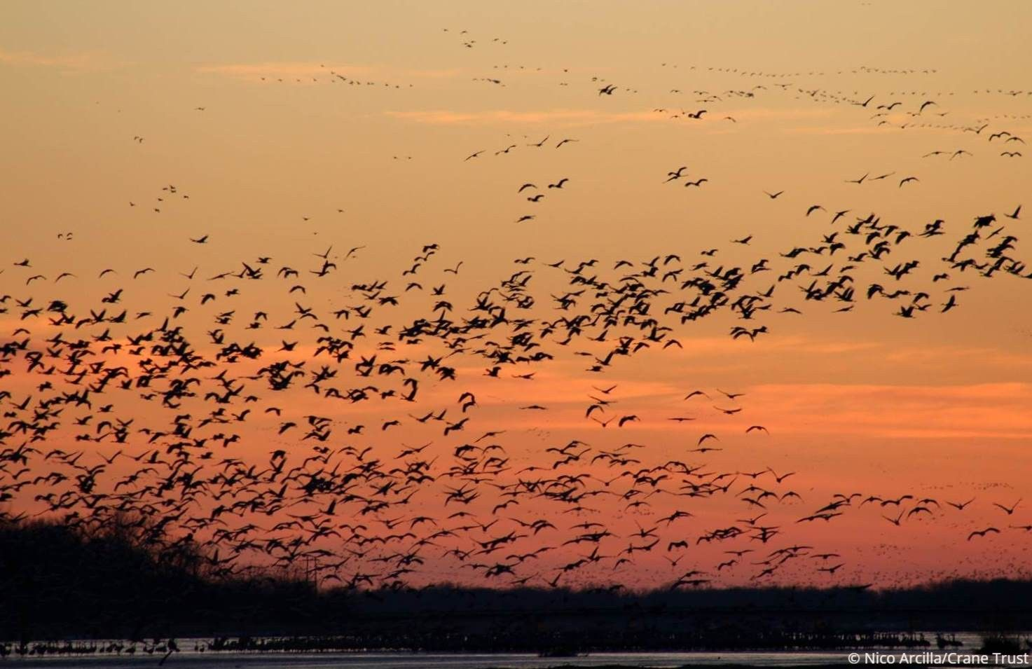 Crane Trust Offering Virtual Tours of Sandhill Crane Migration