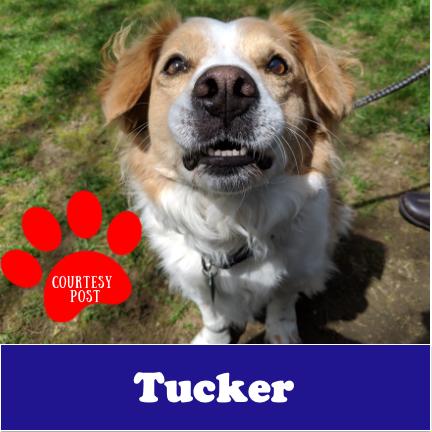 Tucker-Courtesy Post