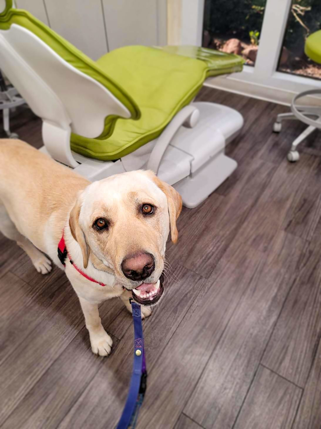Bridging Education and Policy Gaps on Service Dogs in Healthcare Settings