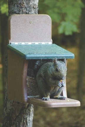 EcoTough Squirrel Feeder