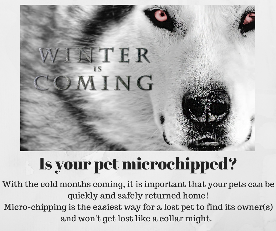 We Offer Microchips to the Public