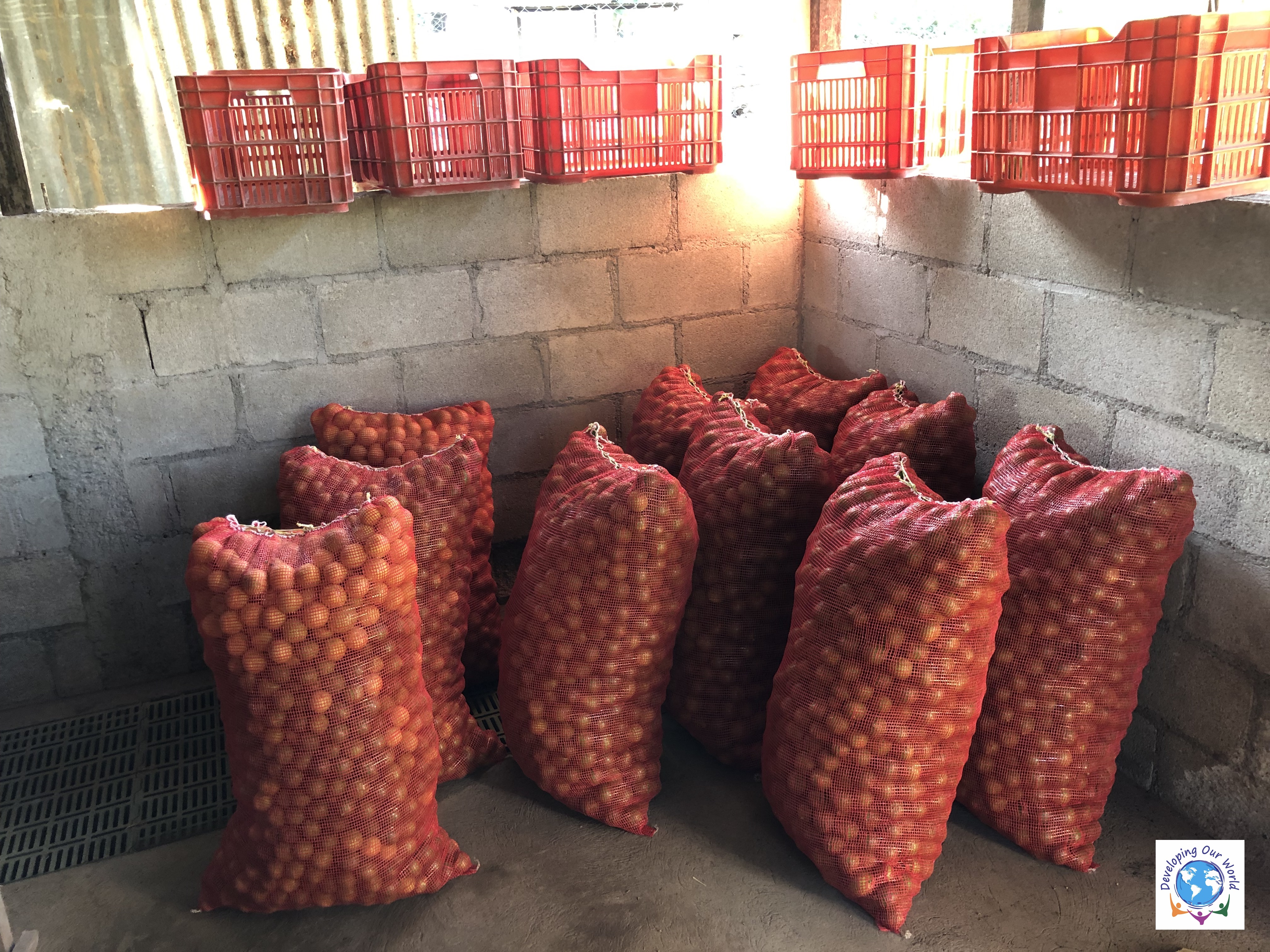 Lemon Harvested and selected, ready for sale