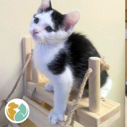 MOJITO- Adopted 11-14!