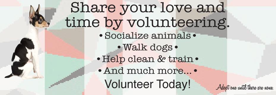 C volunteer