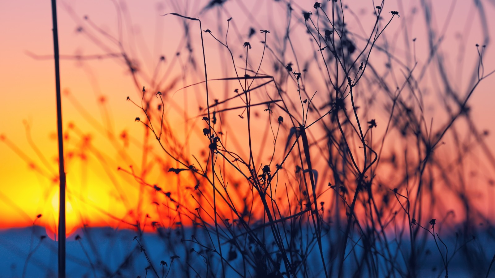A bare shrub in the foreground with the setting sun in the background.