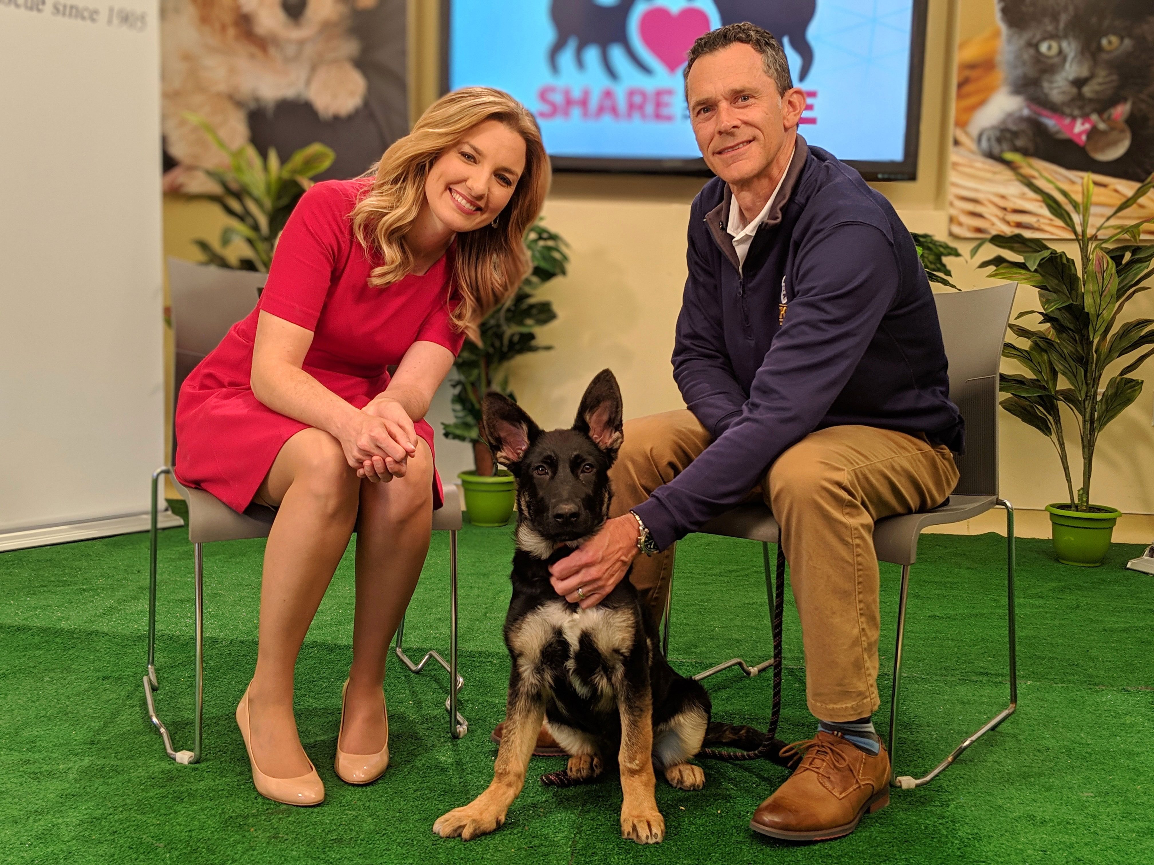 Share the Love Pet Telethon