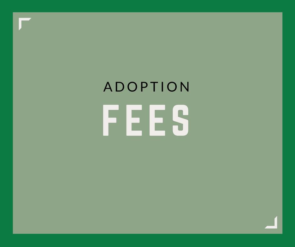 Adoption Service Fees