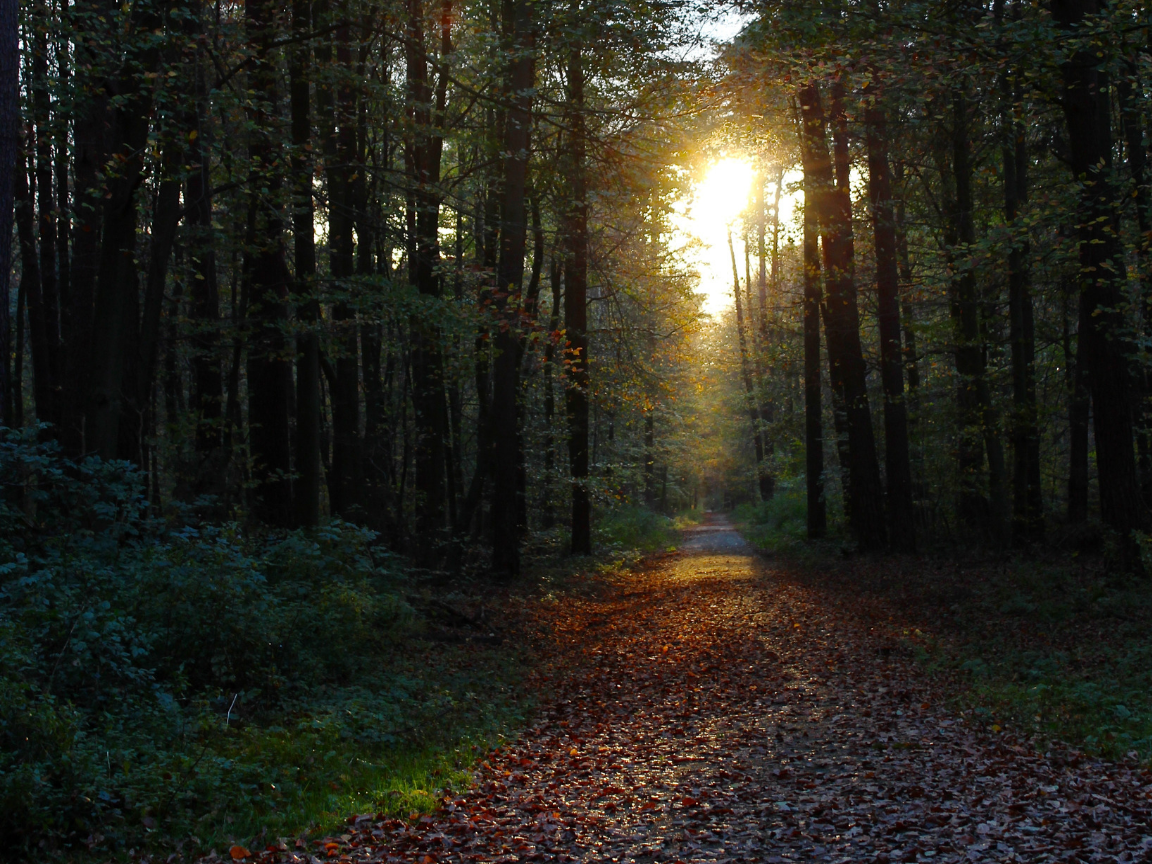 A forest path is lit by sunlight filtering through the trees
