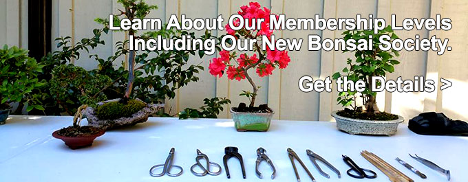 Membership Levels - Bonsai Society