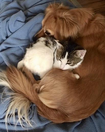 Alvin & Kitty Friend