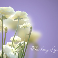 Thinking of You card (flowers)