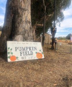 St. Vincent's School for Boys Pumpkin Patch