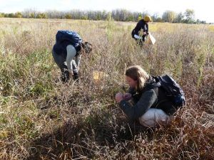 RESTORED HABITAT: BANKING ON SELECTIVE SEED COLLECTING