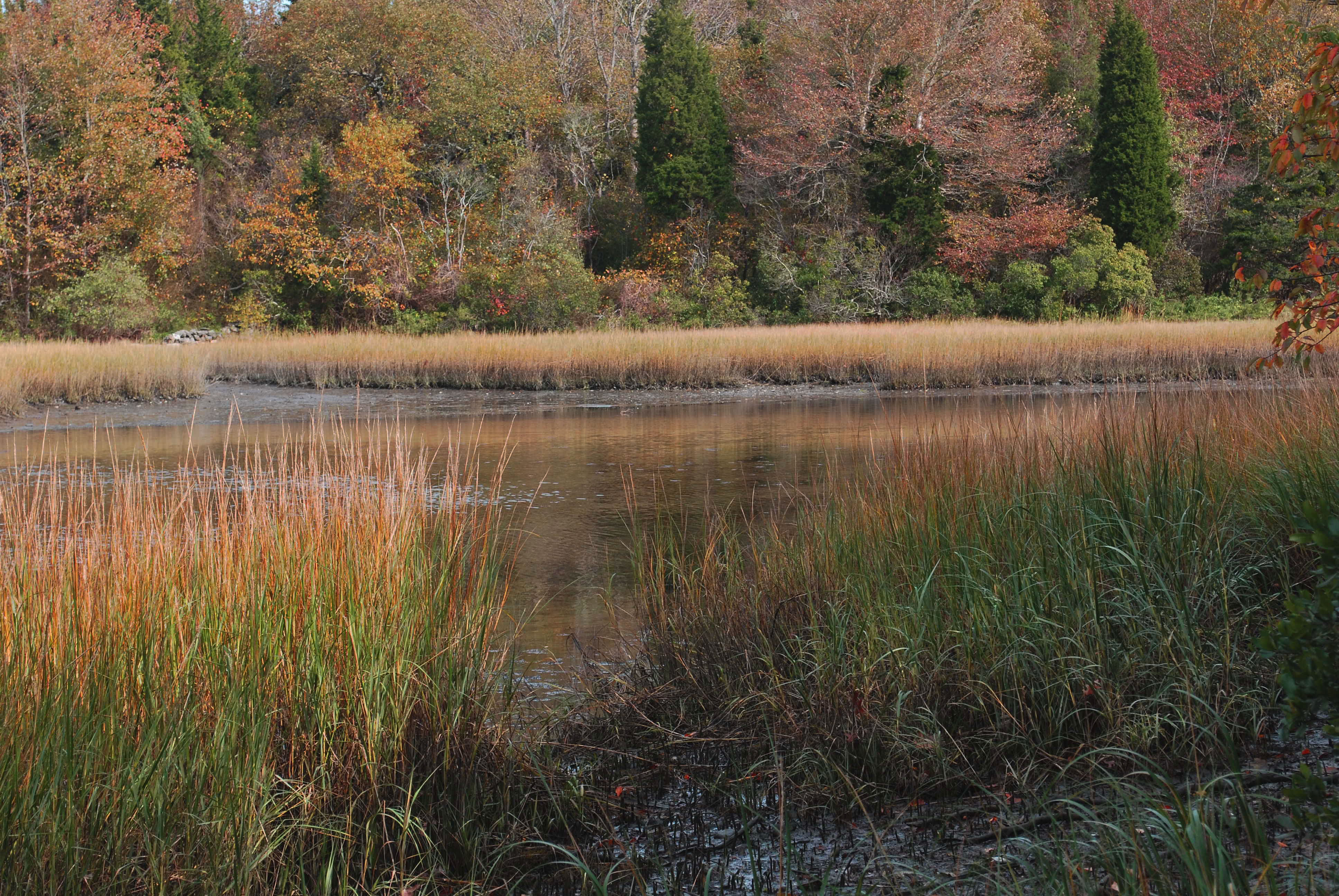 Emilie Ruecker Wildlife Refuge Tiverton Audubon Society of Rhode Island Hike Salt Marsh Environment Birds Birdwatching