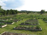 (C7) Eastwood Hills Community Garden
