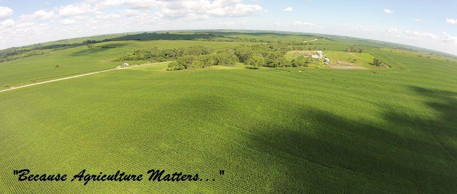 Beautiful corn field