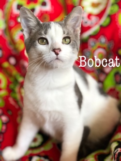 Bobcat 32619